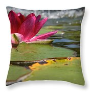 Lily Pads And Petals Throw Pillow