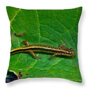 Lined Salamander 3 Throw Pillow