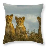Lion Cubs Serengeti National Park Throw Pillow