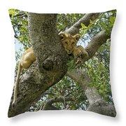 Lion Lookout Throw Pillow