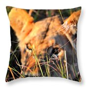 Lioness Throw Pillow