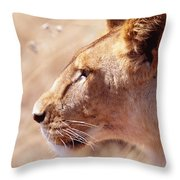 Lioness Staring Intently At Passing Throw Pillow