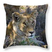 Lioness With Pride In Shade Throw Pillow