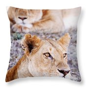 Lionesses Lying In Shade In Maasai Mara Throw Pillow