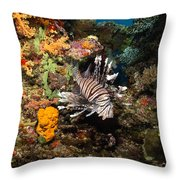 Lionfish, Fiji Throw Pillow