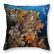 Lionfish, Indonesia Throw Pillow