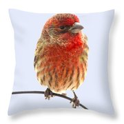 Little Beauty Male Finch I Throw Pillow