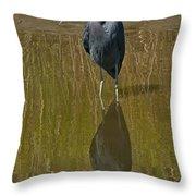 Little Blue Heron Assateague Island Throw Pillow