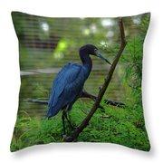 Little Blue Heron Portrait Throw Pillow