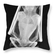 Little Brown Bat X-ray Throw Pillow