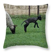 Little Lamb Playing Throw Pillow