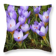 Little Purple Crocuses Throw Pillow