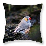 Little Red Beak Throw Pillow