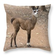 Little Two-toner Throw Pillow