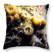 Live Coral Feeding At Night Throw Pillow