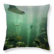 Live Coral Reef Throw Pillow
