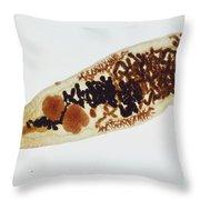 Liver Fluke Lm Throw Pillow