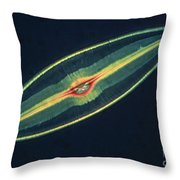 Lm Of A Diatom Alga, Caloneis Permagna Throw Pillow