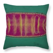 Lm Of An Alga, Surirela Sp Throw Pillow by Eric Grave