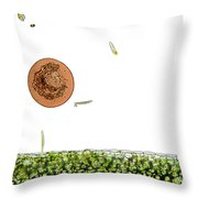 Lm Of Entamoeba Cyst Throw Pillow