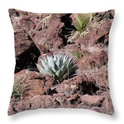 Lone Agave Throw Pillow