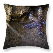 Lone Seastar Throw Pillow