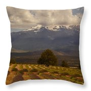 Lone Tree And Lavender Fields Throw Pillow