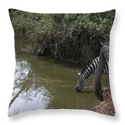 Lone Zebra At The Drinking Hole Throw Pillow