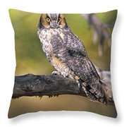 Long Eared Owl On Branch Throw Pillow