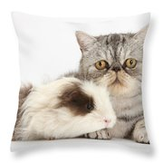 Long-haired Guinea Pig And Silver Tabby Throw Pillow
