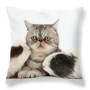 Long-haired Guinea Pigs And Silver Throw Pillow
