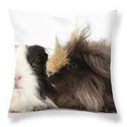 Long-haired Guinea Pigs Throw Pillow
