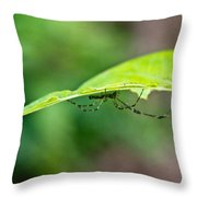 Long Leg Spider Throw Pillow