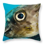 Long-spine Porcupinefish Diodon Throw Pillow
