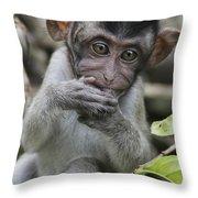 Long-tailed Macaque Macaca Fascicularis Throw Pillow