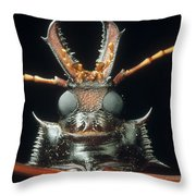 Longhorn Beetle Macrodontia Cervicornis Throw Pillow