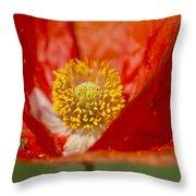 Longhorned Grasshopper Nymph On Orange Poppy Throw Pillow