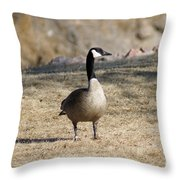 Looking Around Throw Pillow