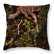 Looking For Nuts Throw Pillow