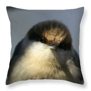 Looking Fuzzy Throw Pillow