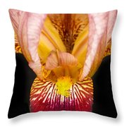 Looking Inside Throw Pillow