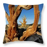 Looking Through A Bristlecone Pine Throw Pillow
