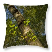 Looking Up At A Tree Trunk Throw Pillow