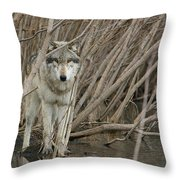 Looking Wild Throw Pillow