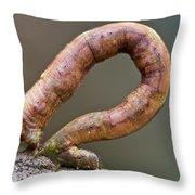 Looper Moth Geometridae Caterpillar Throw Pillow