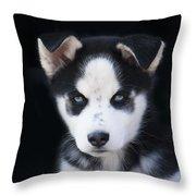 Lop Eared Siberian Husky Puppy Throw Pillow