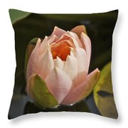 Lotus Opening 2804 Throw Pillow