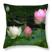 Lotus--stages Of Life II Dl024 Throw Pillow
