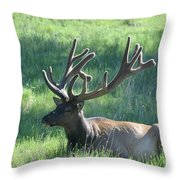 Lounging Elk Throw Pillow