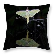 Luna Moth And Reflection Throw Pillow